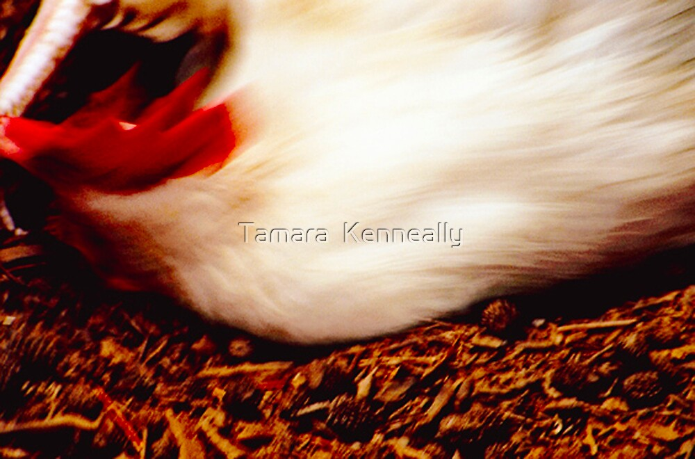Dust Bathing Chicken by Tamara  Kenneally