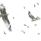 Red kites in mid-Wales by nadine henley