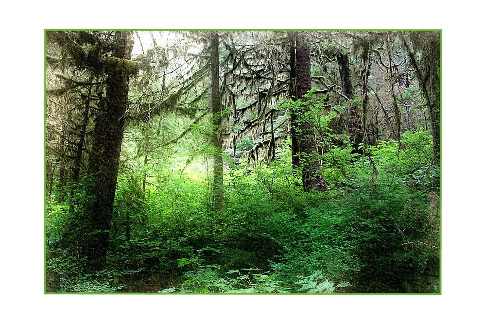 Another Rainforest picture, Ketchikan Alaska - August 2007 by Liz Wear