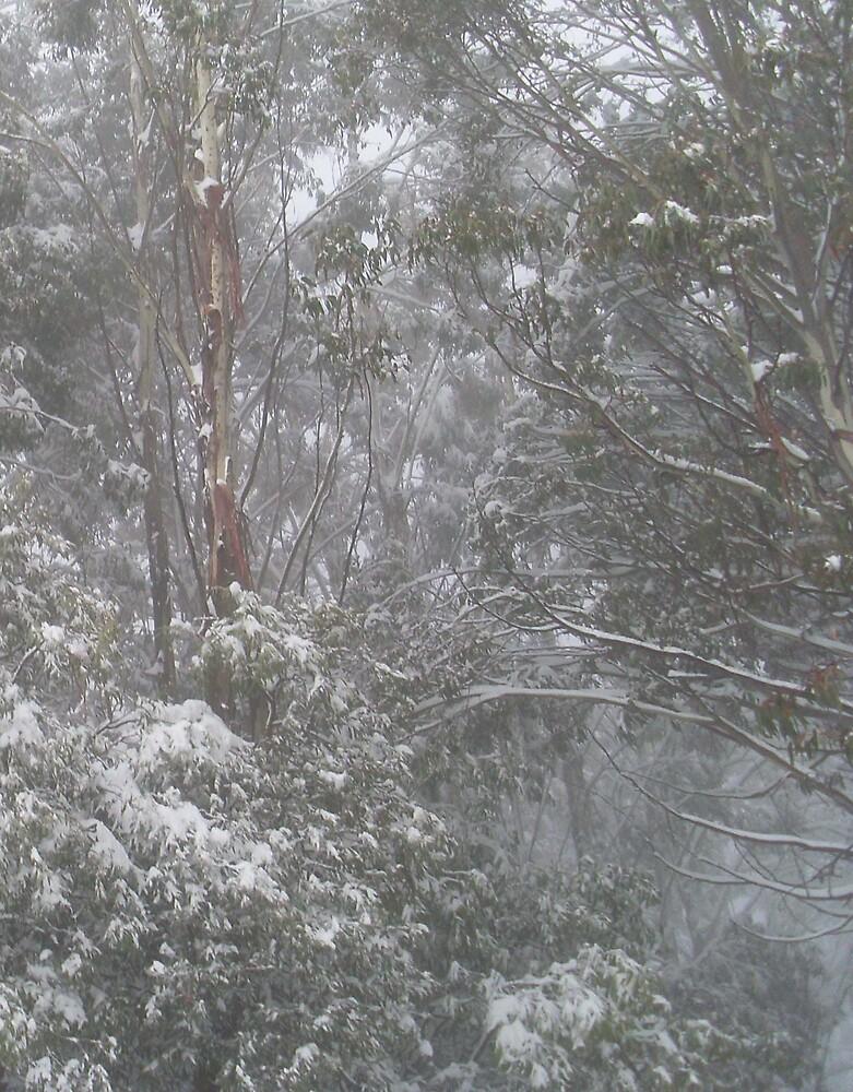 snow on trees by jezza