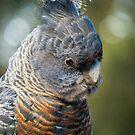Gang-gang Cockatoo (female) by theleastone