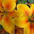 Lily's  by Gemma27