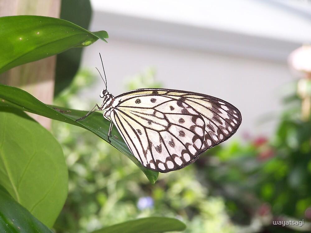 Butterfly 1 by wayatsagi