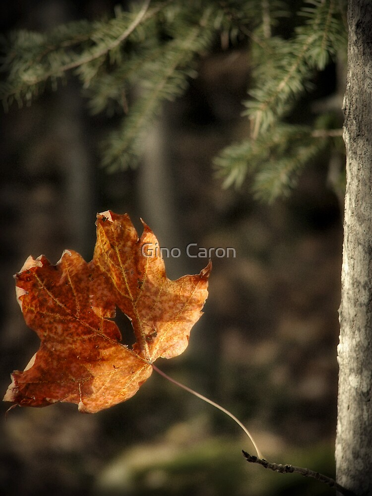 Lonely Now by Gino Caron