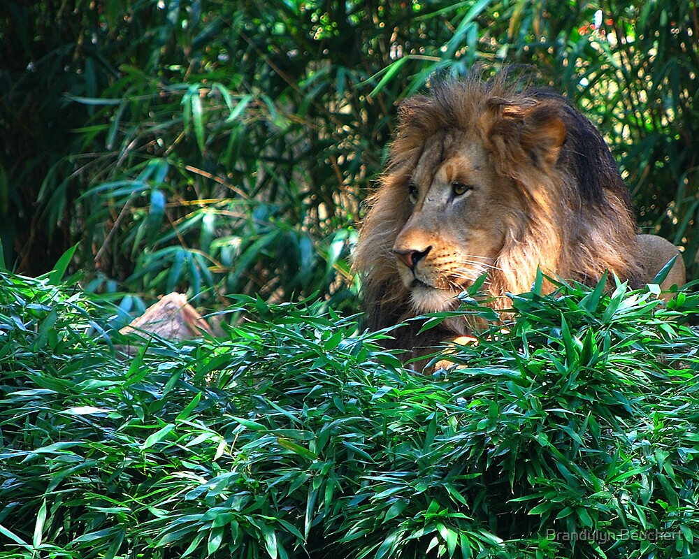 Lion at the Zoo by Brandylyn Beuchert