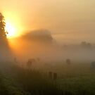 Morning cows at Groeneveld by jchanders