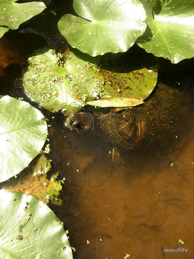 Hungry Turtle by seasoflife