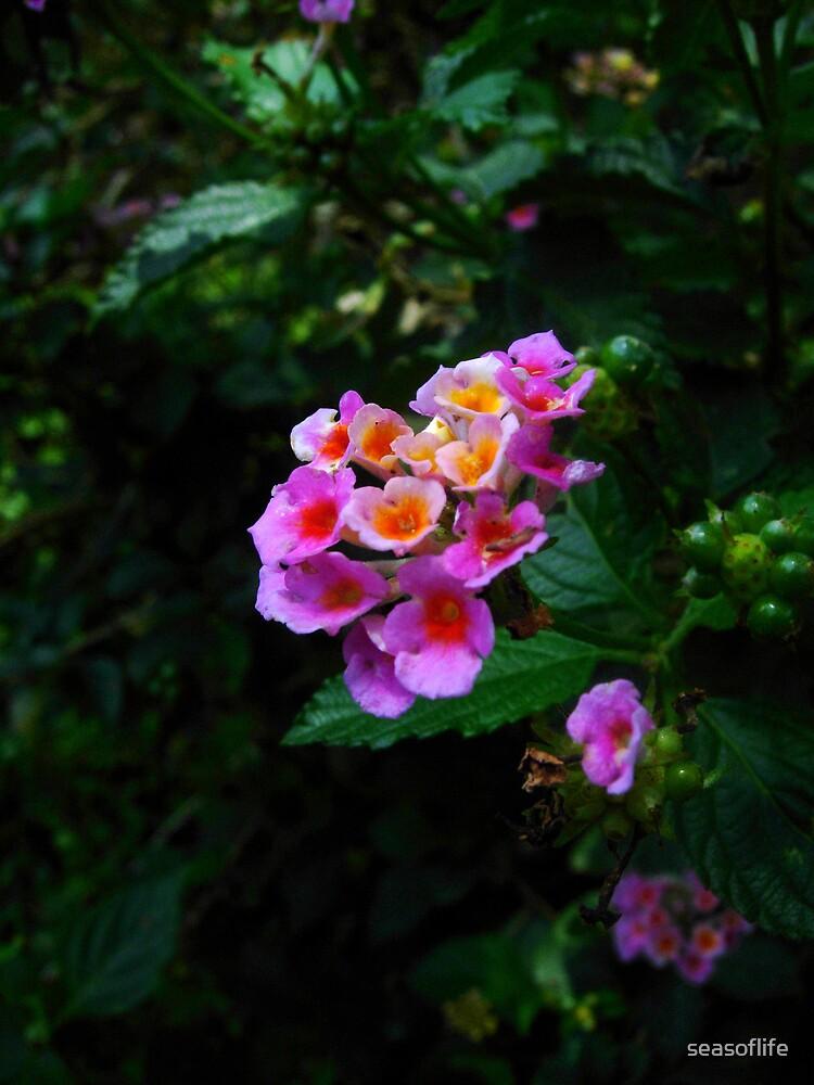 Flower Bush by seasoflife