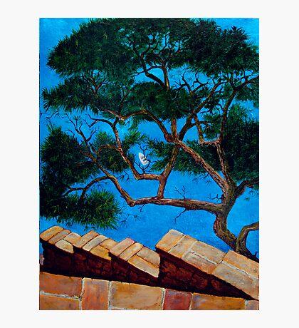 Tree over Capri Sea Photographic Print