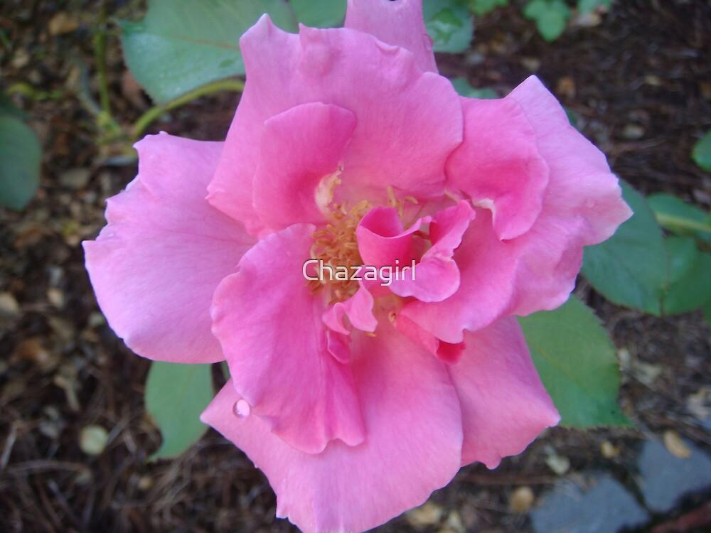 Blushing Pink by Chazagirl