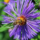 A bee on a pretty flower by Anthony Goldman
