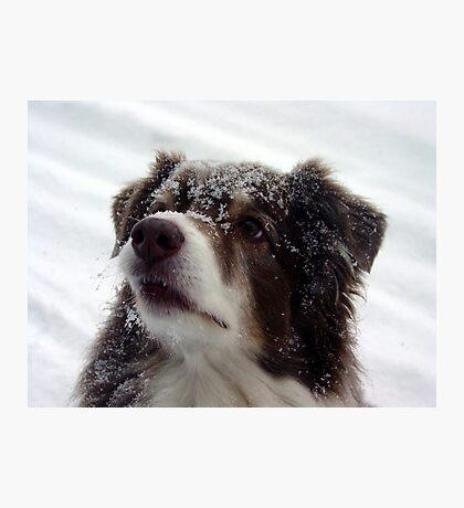 Snowface Photographic Print