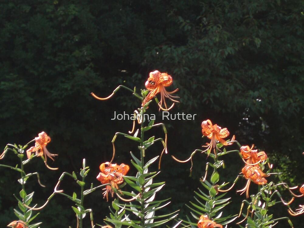 Flowers by Johanna  Rutter