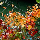 Autumn leaves by Segalili