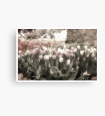 Bed of Tulips Canvas Print