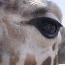 Look into my eye by wahboasti