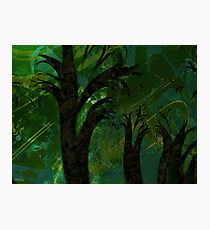 Forest Canopy - high res Photographic Print