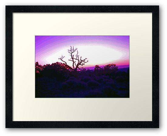 Sunset through Silhouetted Tree in Desert (2) by SteveOhlsen