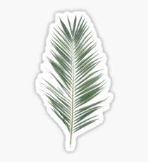 Palmblatt Palm Sticker