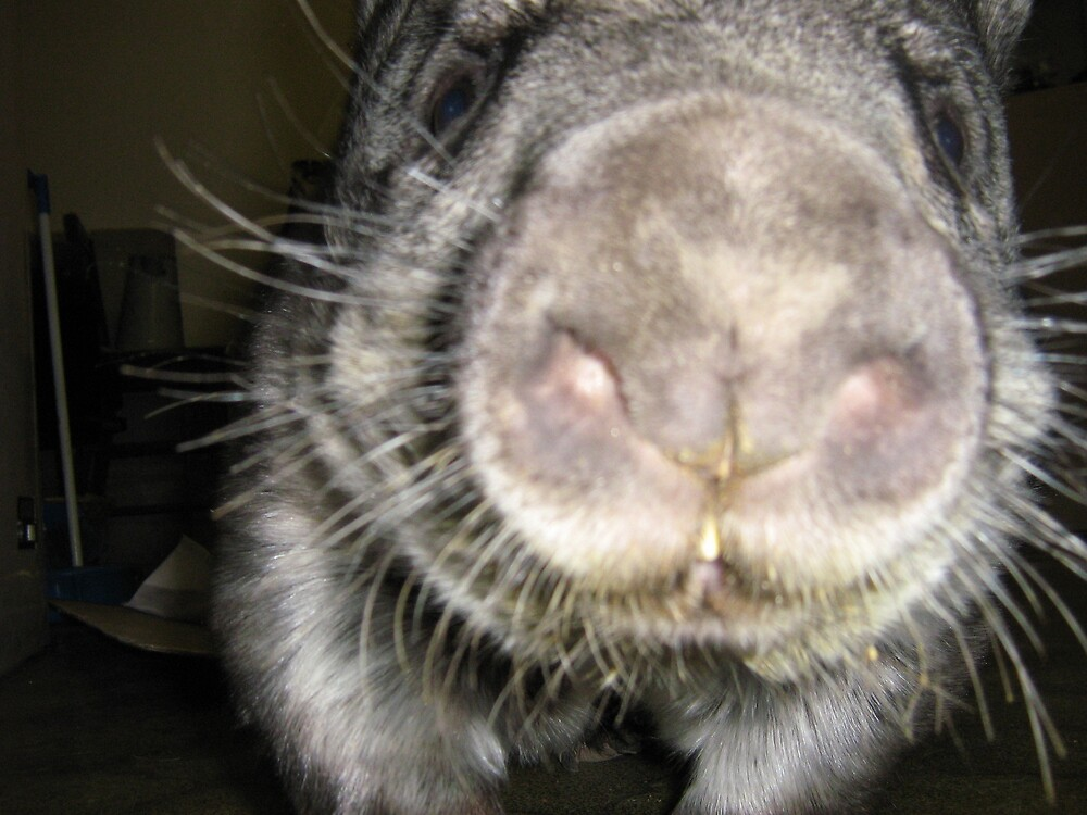 Wombat nose by hairylabear
