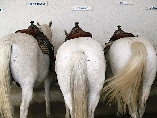 Horses of Carmargue  by Sam  Athey