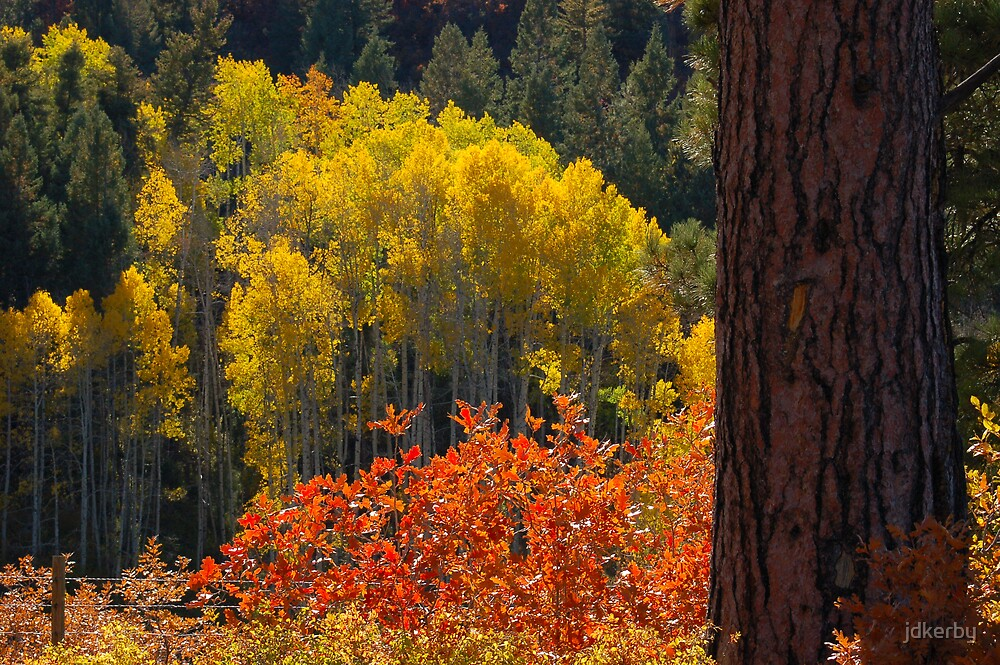 Fall on the New Mexico - Colorado Border by jdkerby