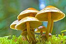 Forest Canopies by John Butler