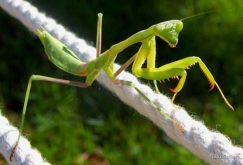 Mr. Mantis by Nikki Collier