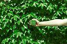 Grüne Träume von josemanuelerre