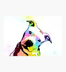 Pit bull | Rainbow Series | Pop Art Photographic Print