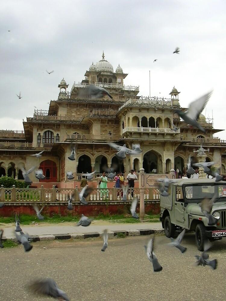 Pigeons by aadhityan