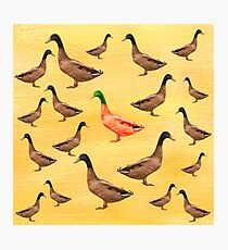 Different Duck Photographic Print