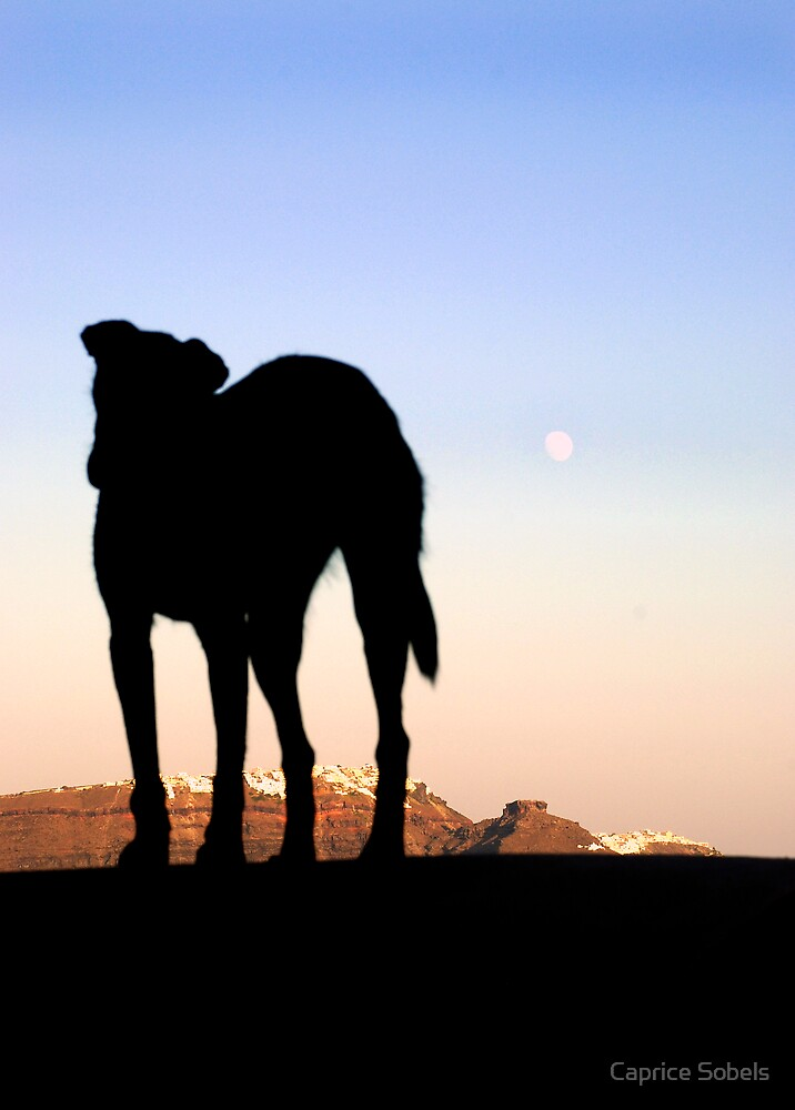 Howling Sunset Silhouette by Caprice Sobels