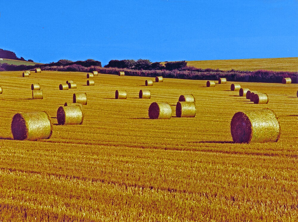 Golden rolls by David Ffrench