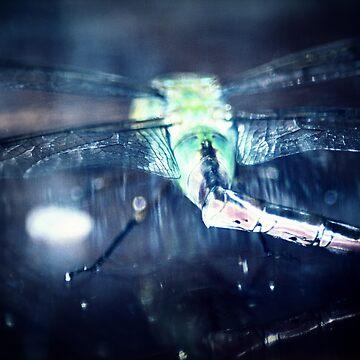 dragonfly macro by DlmtleArt