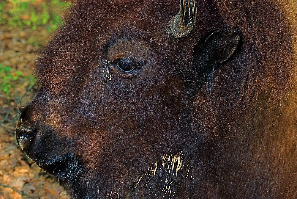 Sad eyes by Jim Caldwell