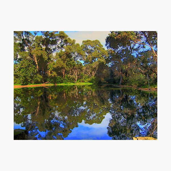 The Pond On a winters day Photographic Print