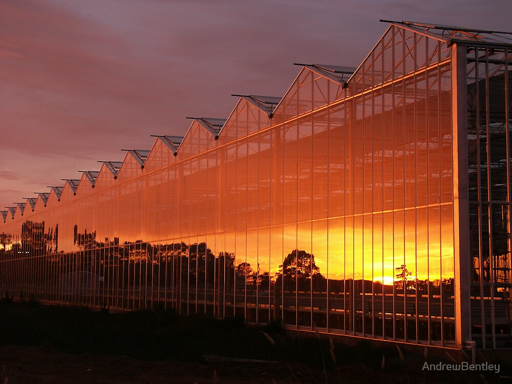 Glasshouse Sunset  by AndrewBentley
