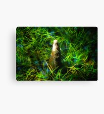 Cypress Knee Canvas Print