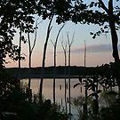 Woodland Silhouette by RVogler
