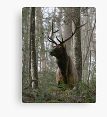 Elk (Cervus elaphus) 20D0020599 Canvas Print