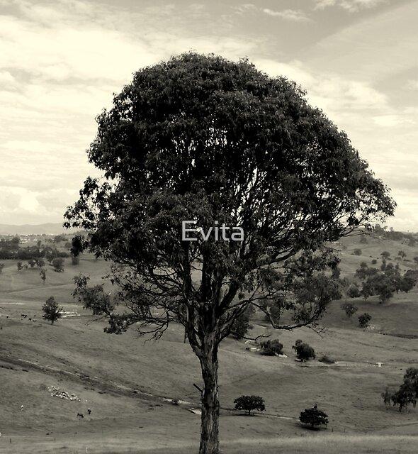 Lone Tree by Evita