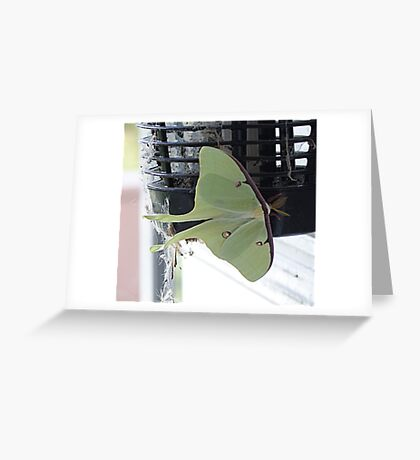 Mothra Greeting Card