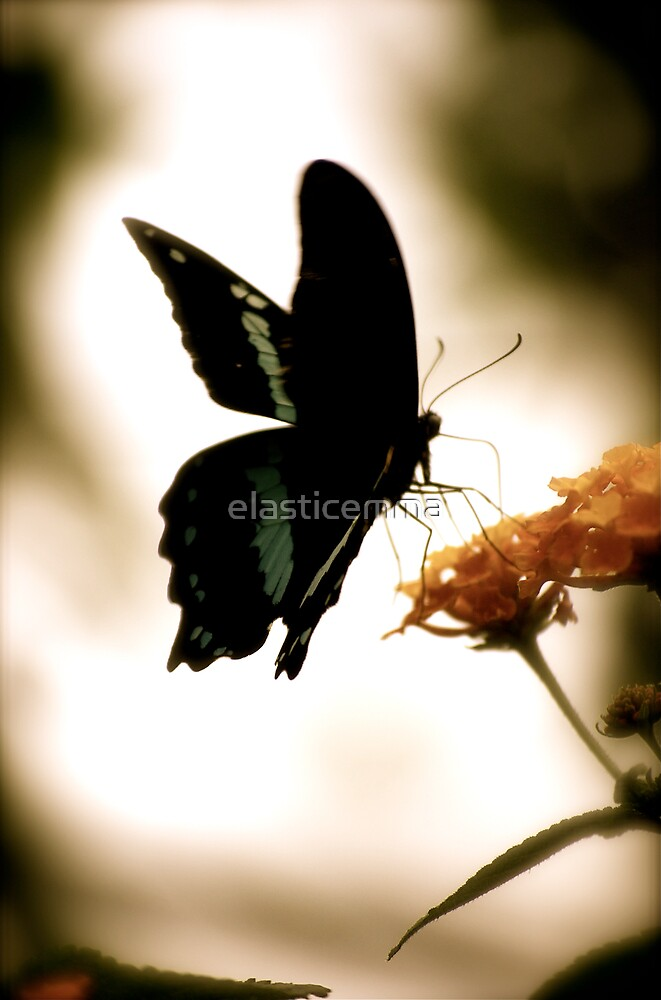 Butterfly or Fairy? by elasticemma