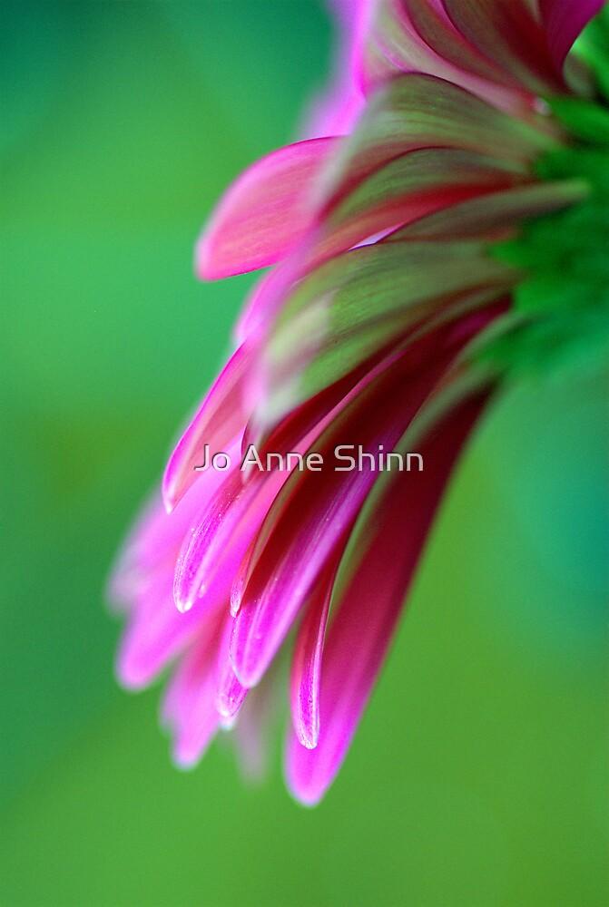 Blossom by Jo Anne Shinn