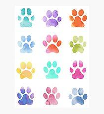 Watercolour Paw Prints, Dog Paws Photographic Print