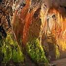 flamboyant,Anglesea by Darryl Fowler