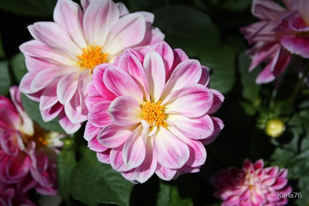 Amazing flower by Karla76