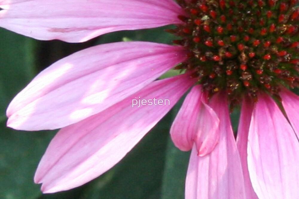 Pink Flower by pjesten