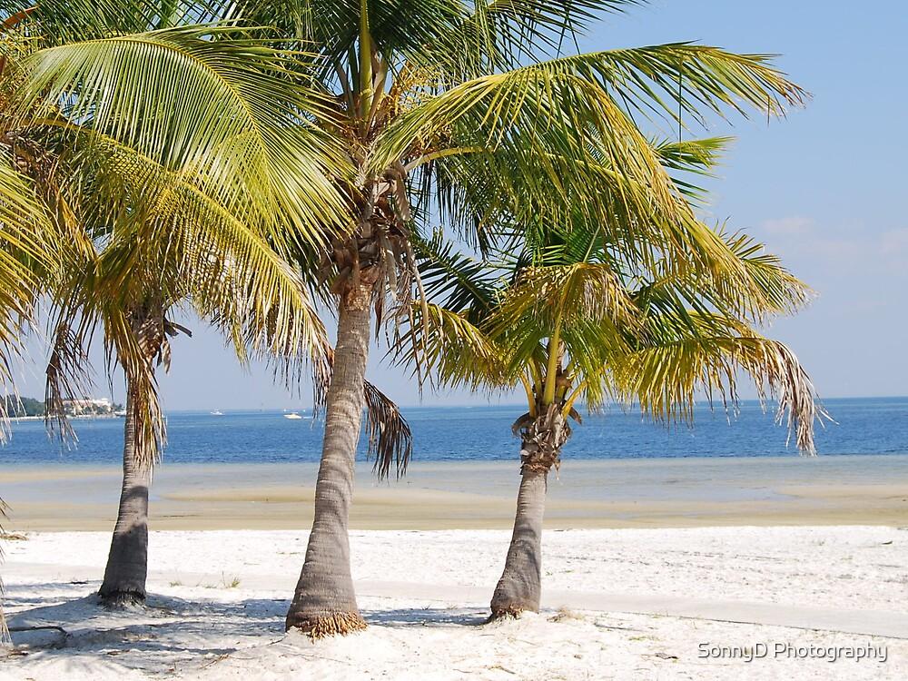 palms by SonnyD Photography